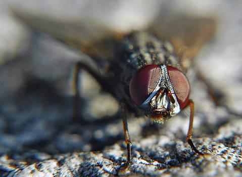 The Fly's Eyes by Jonny Jelinek