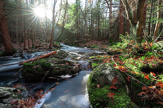 The Forest Stream by Brian Hale