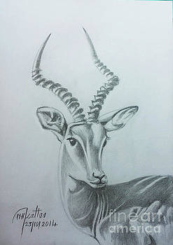 The gazelle by Mohammad Hayssam Kattaa