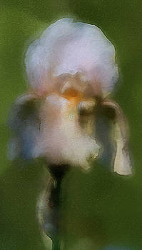 The Gentle Touch of Iris by Kathy Clark