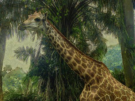 The Giraffe by Steve Taylor