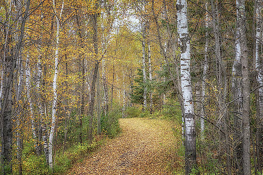 Susan Rissi Tregoning - The Golden Path