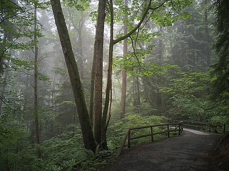 The greens of Burnaby Mountain by Jordan Barnes
