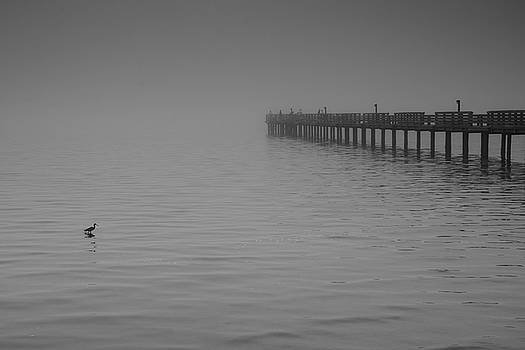 The Harbor in the Fog by Mitch Spence