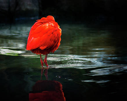 The Hiding Flamingo by Nazeem Sheik