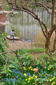The Joy of Spring - Central Park New York by Miriam Danar
