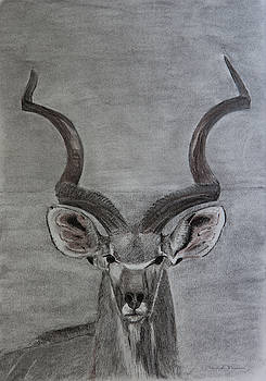 The Kudu by Dawid Theron