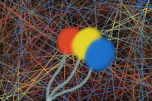 The lollipop family considering the web of the universe  by Yonko Kuchera