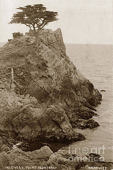 California Views Archives Mr Pat Hathaway Archives - The Lone Cypress Tree on Midway Point circa 1920