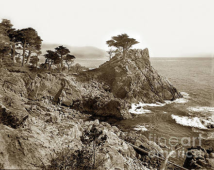 California Views Archives Mr Pat Hathaway Archives - The Lone Cypress tree on Midway Point on the 17 Mile Drive, Pebb