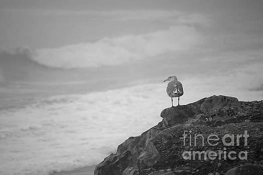 The Lone Gull by Jeni Gray