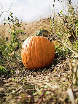 The Lone Pumpkin by Whitney Leigh Carlson