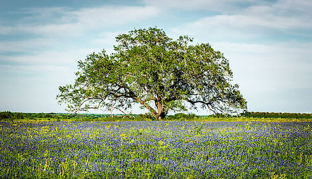 The Lone Tree by David Morefield