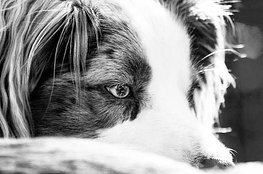 The Look by Annette Persinger