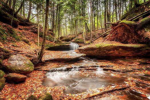 Susan Rissi Tregoning - The Magical Dells at Houghton Falls