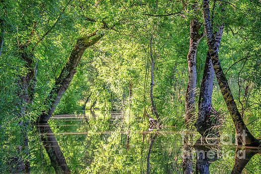 The Marais Poitevin by Delphimages Photo Creations