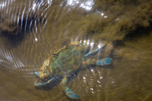 The Mean Blue Crab by Debra Martz