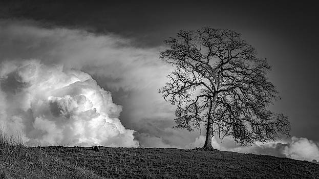 The Mighty Oak by Dave Prendergast