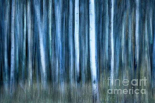 The Night's Forest by Illumina Photographics