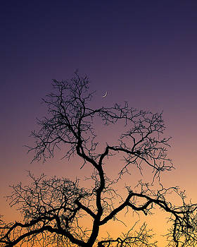The Oak And The Moon by Allan Erickson