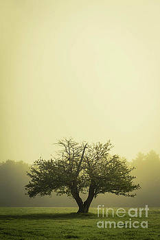 The Old Apple Tree NH by Edward Fielding