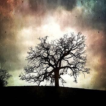 The Old Oak III by John Rodrigues