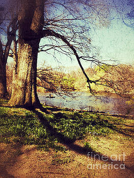 The Old Tree - Central Park in Spring by Miriam Danar