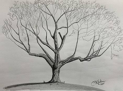 The Old Tree  by Tony Clark