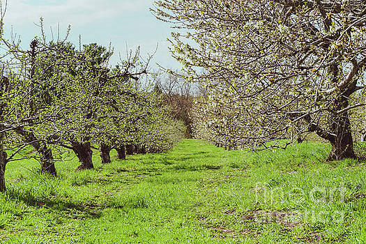 The orchard by Claudia M Photography