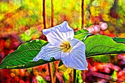 The Painted Trillium 18 by Daniel Thompson