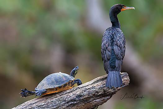 The Pair by Linda Burek
