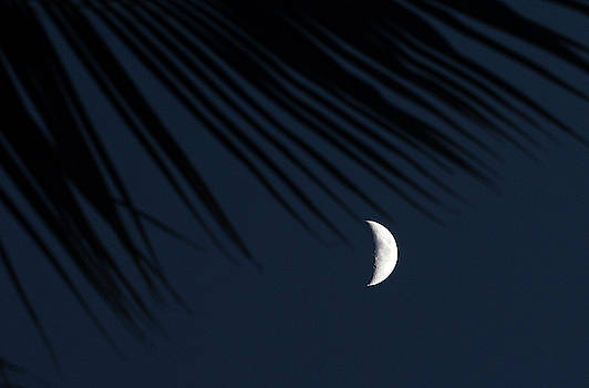 The Palm Tree and the Moon by Alina Oswald