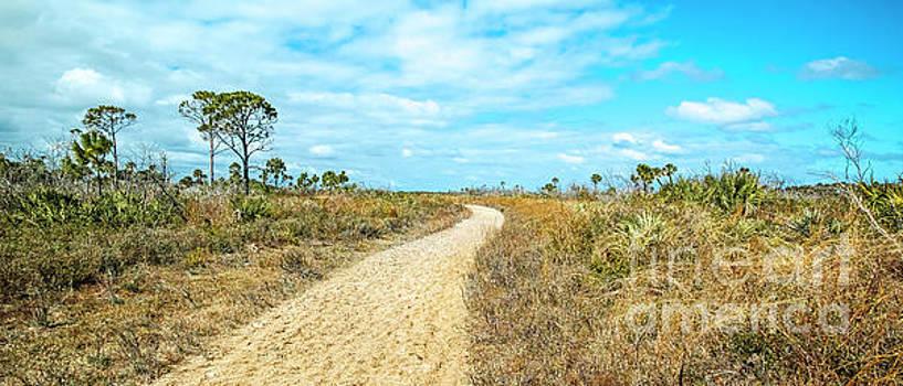 The Path, Florida Coastal Landscape Panorama by Felix Lai