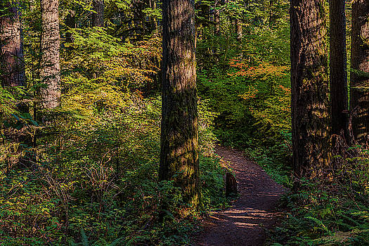 The path. by Ulrich Burkhalter