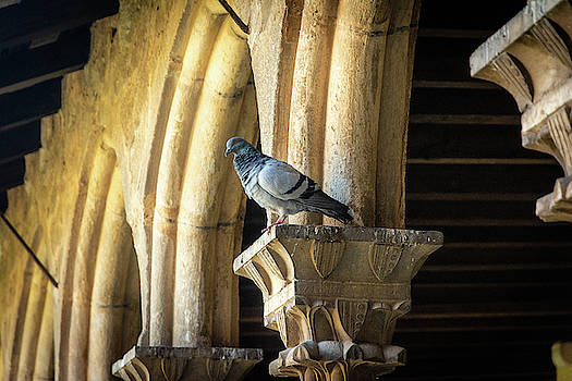 The Pigeon and the Arches by Andrew Matwijec