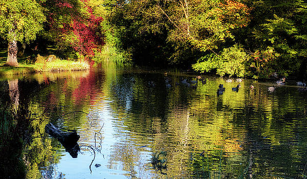 Jeremy Lavender Photography - The pond at Inglewood House