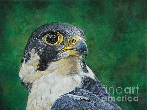 The Proud Peregrine....Fastest Creature on the planet by Bob Williams