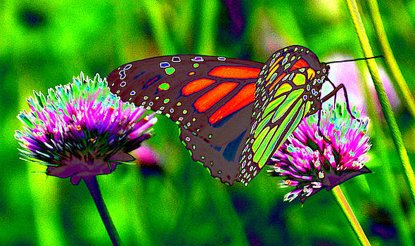 The Red Monarch Butterfly by Tom Kelly