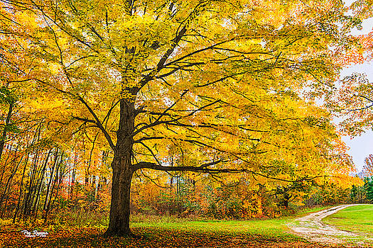 The Road to Autumn Bliss by Peg Runyan