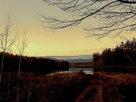 The Road to Lake Kanasatka 2 by Elizabeth Tillar