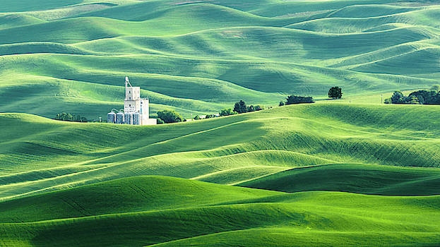 The Rolling Fields of Palouse by Hamish Mitchell