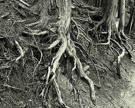 The Roots Of Time by Jeffrey PERKINS