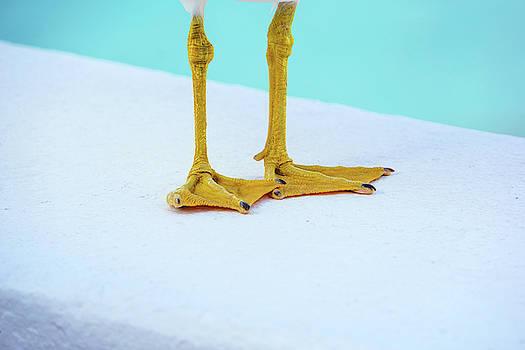 The Seagull's Feet - Minimalism by Jonny Jelinek