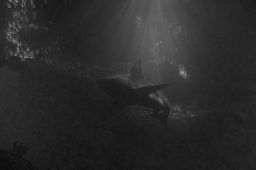 The Shark BW by Ernie Echols