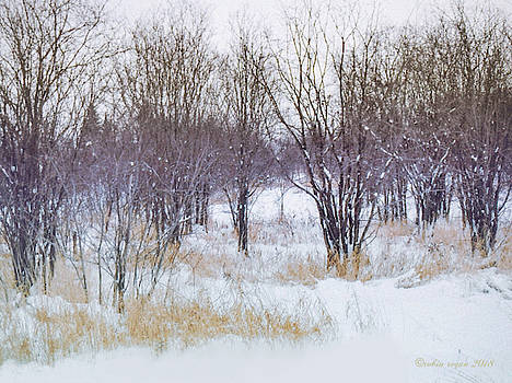 The Simple Beauty of Snow by Robin Regan