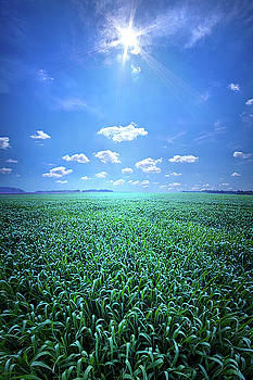 The Simple Things in Nature Have a Message by Phil Koch
