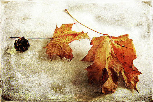 The Sound of Autumn by Randi Grace Nilsberg