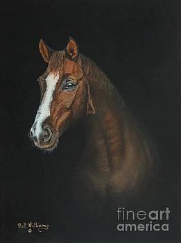 The Stallion by Bob Williams