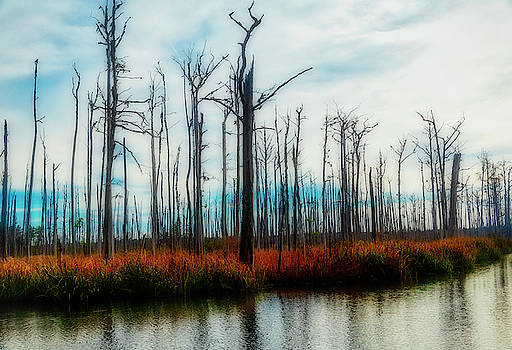 The Swamp by Robert Bolla