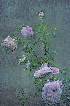 The Sweetest Rose 2 by Andrea Swiedler